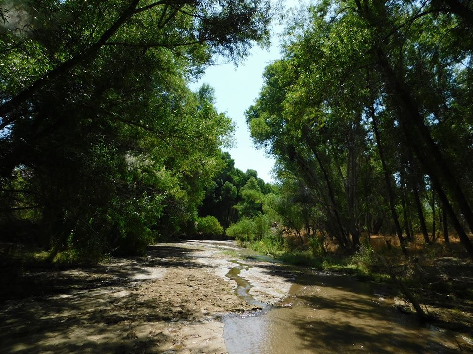 Hassayampa River Preserve Opens in new window